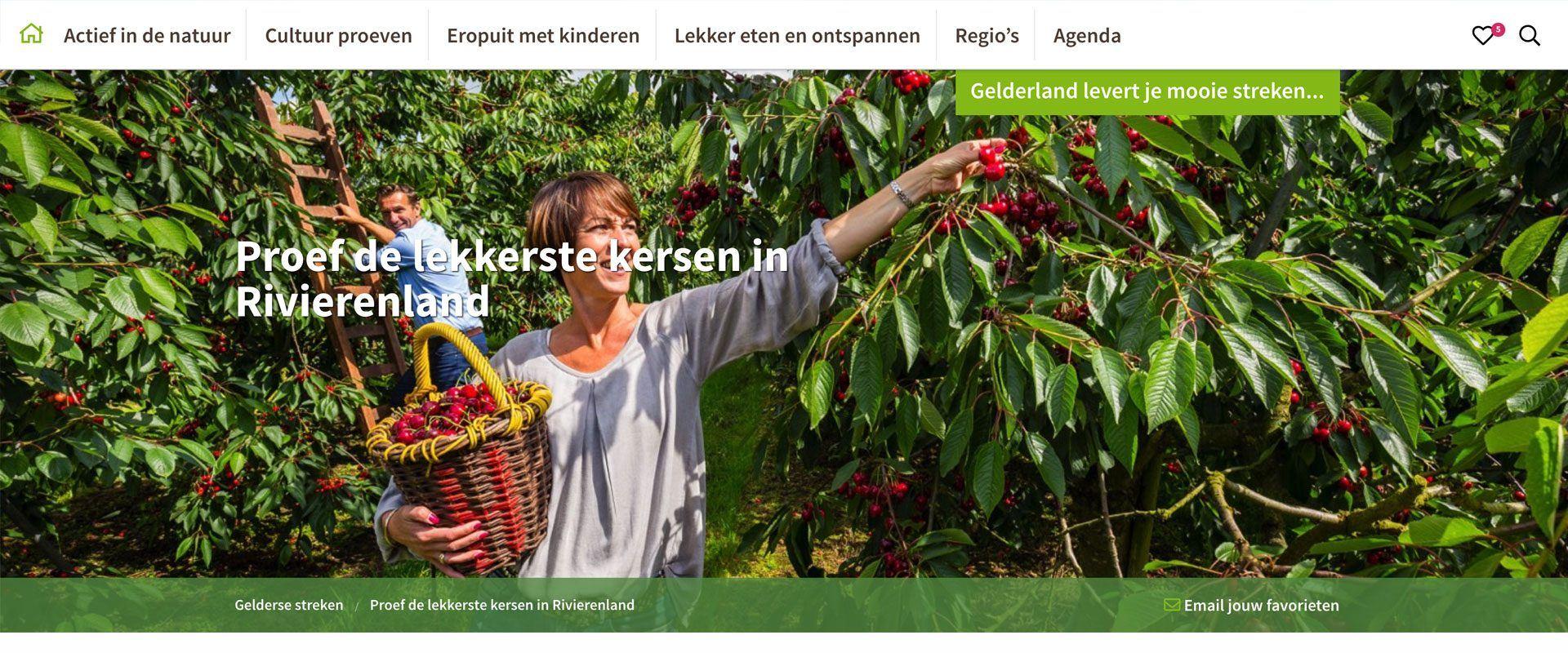 WordPress-website-design-8